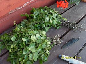Puutarhapalvelua vihdanteosta alkaen - Ota yhteyttä e-mail: puutarhapalvelua@gmail.com