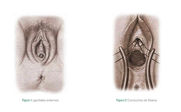 Portal Obstetrica.COM: ANATOMÍA DEL APARATO GENITAL FEMENINO ...