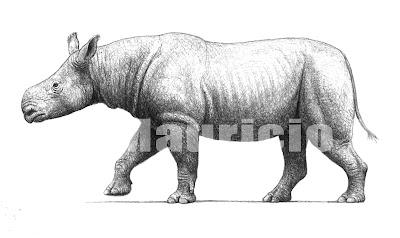 Aceratherium rino fosil