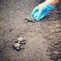 Releasing turtles
