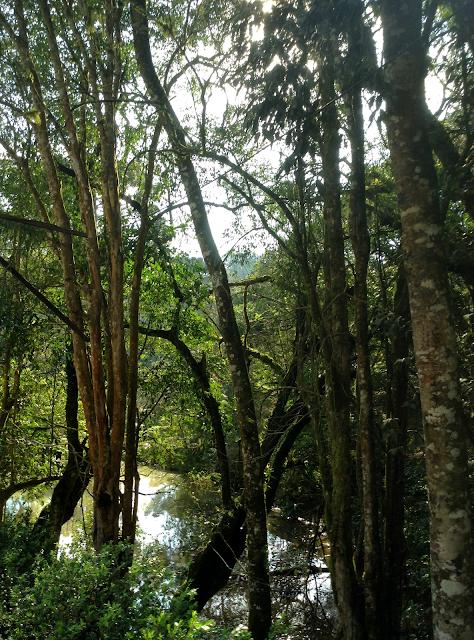 Sol nas árvores