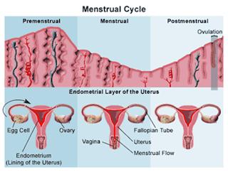 bahaya penebalan dinding rahim