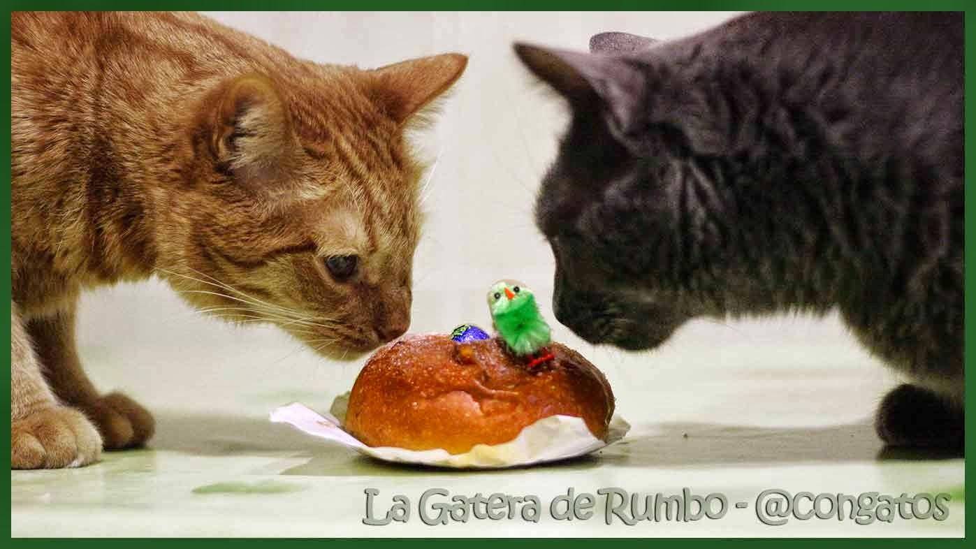 Dos gatos y la mona de Pascua