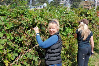 Pat Picking Blackberries - Oceanside, Oregon, USA