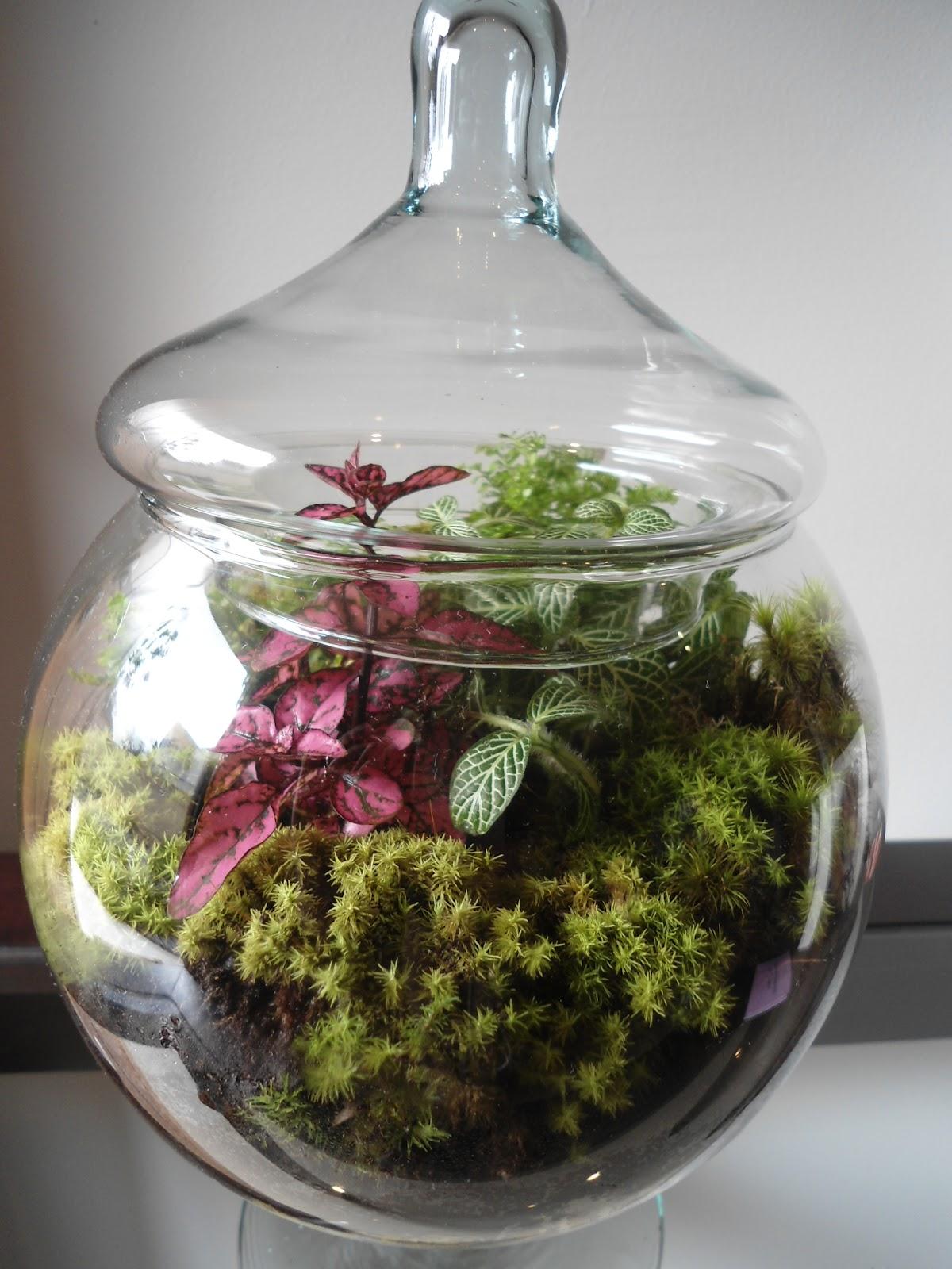 mini jardim de vidro : mini jardim de vidro:Amor de Jardim: TERRÁRIOS (TERRARIUMS) OU JARDINS DE VIDRO – Deixe-se