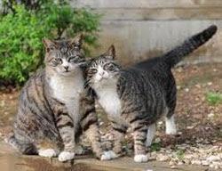foto dua ekor kucing yang saling menyayangi