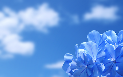 Romantic Blue Flowers HD Wallpapers