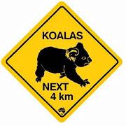 Spot A Koala?