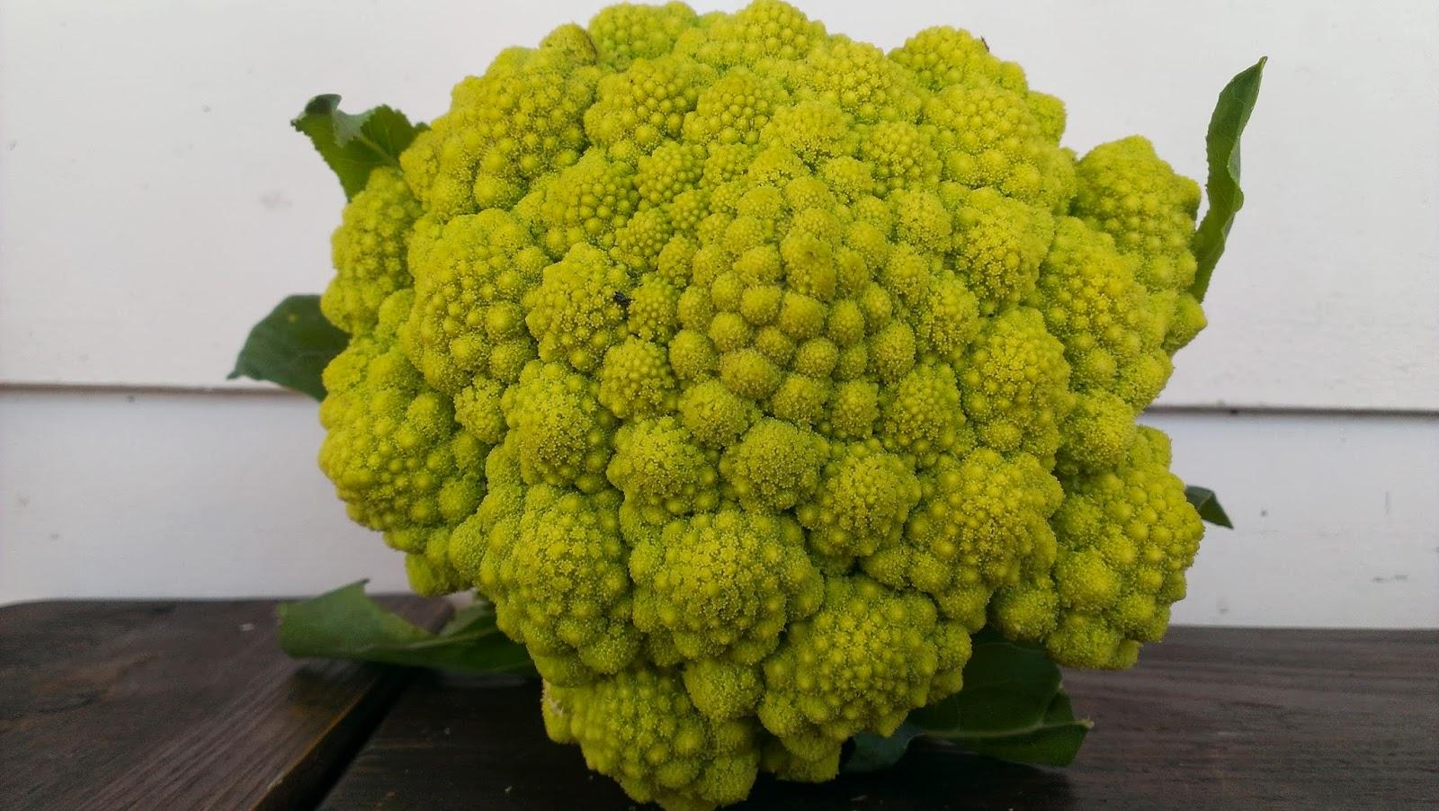 Glut a year in my patch saturday spotlight romanesco broccoli mightylinksfo