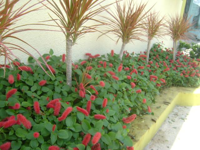 plantas e jardins ornamentais:Jardinagem Triunfo – Fazendo Arte em Seu Jardim