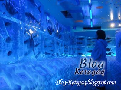 Akuarium ais