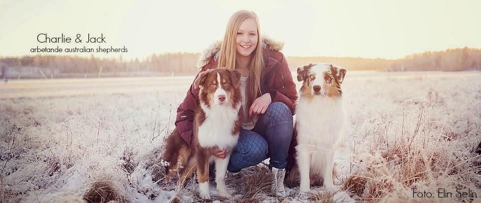 Erikas Hundar