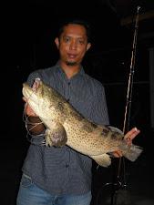 Bino - Ikan Kerapu