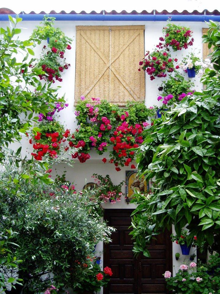 La flora de los patios de c rdoba - Plantas para patio ...