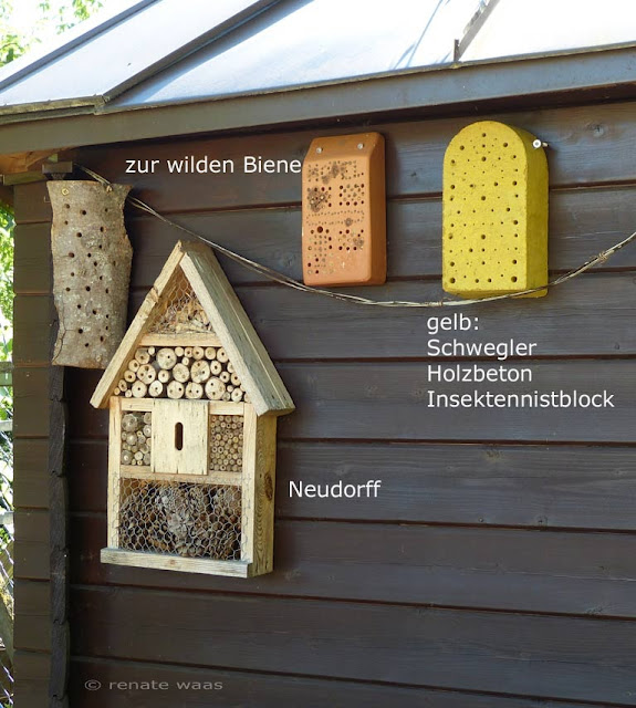 Wo wohnen die Wildbienen und Insekten am Liebsten? Erfahrung aus unserem Garten