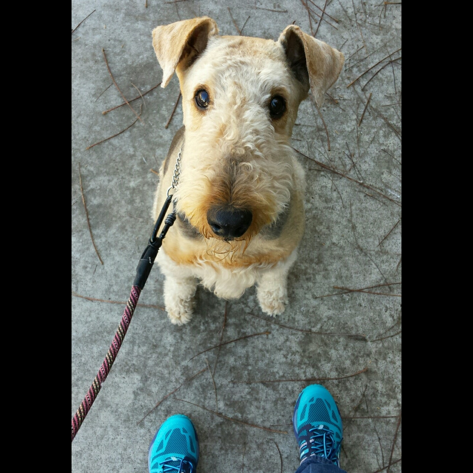 Acorn to Oak: My Morning Walk
