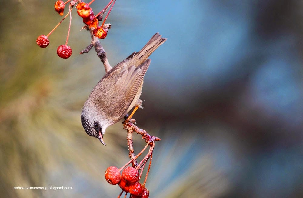 Ảnh động vật: Chú chim xinh đẹp 2 3