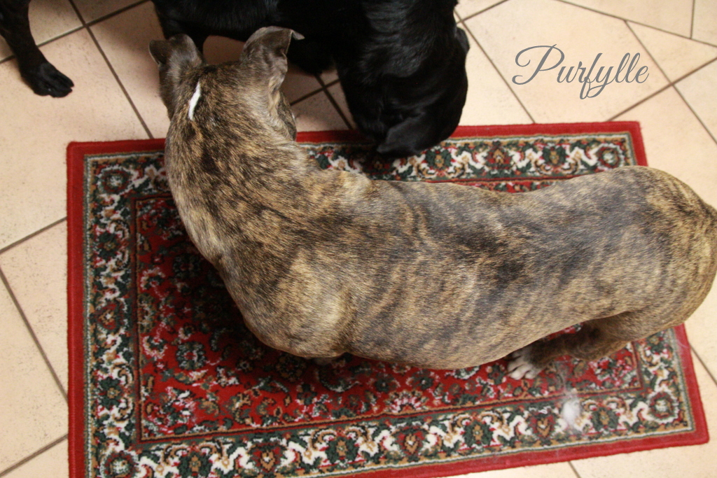 both dogs inspecting the rug closely