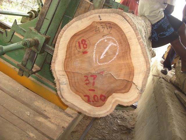 Indonesia-Uni Eropa harus memastikan legalitas kayu