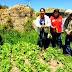 CONTINUA LA IMPLEMENTACIÓN DE BIOHUERTOS FAMILIARES EN SANAGORÁN