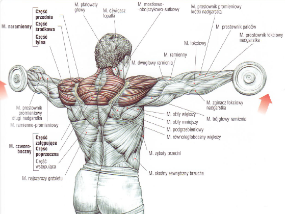 какие упражнения быстро сжигают жир на спине