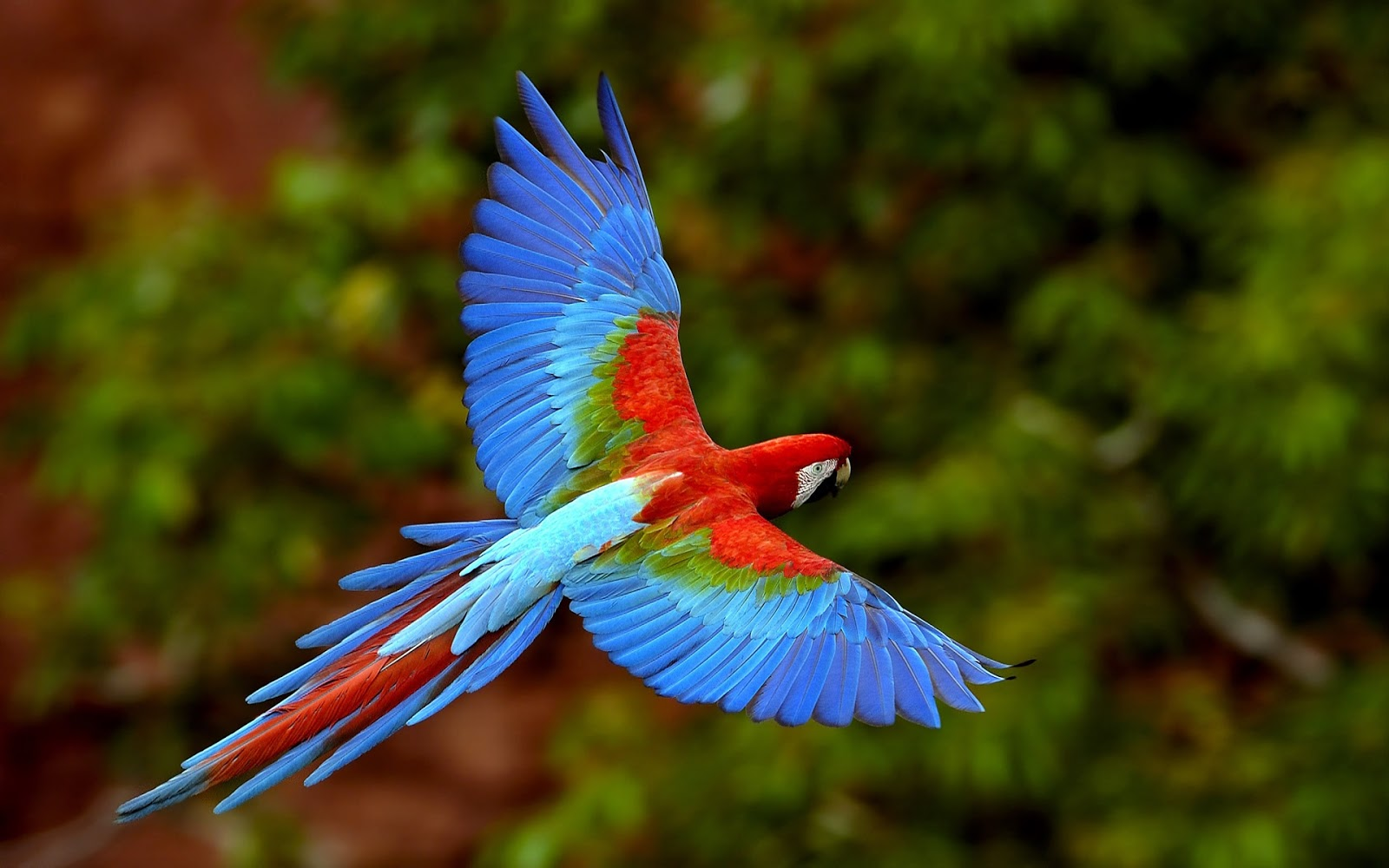 Q Significa Parrot miercoles  3 de julio de 2013