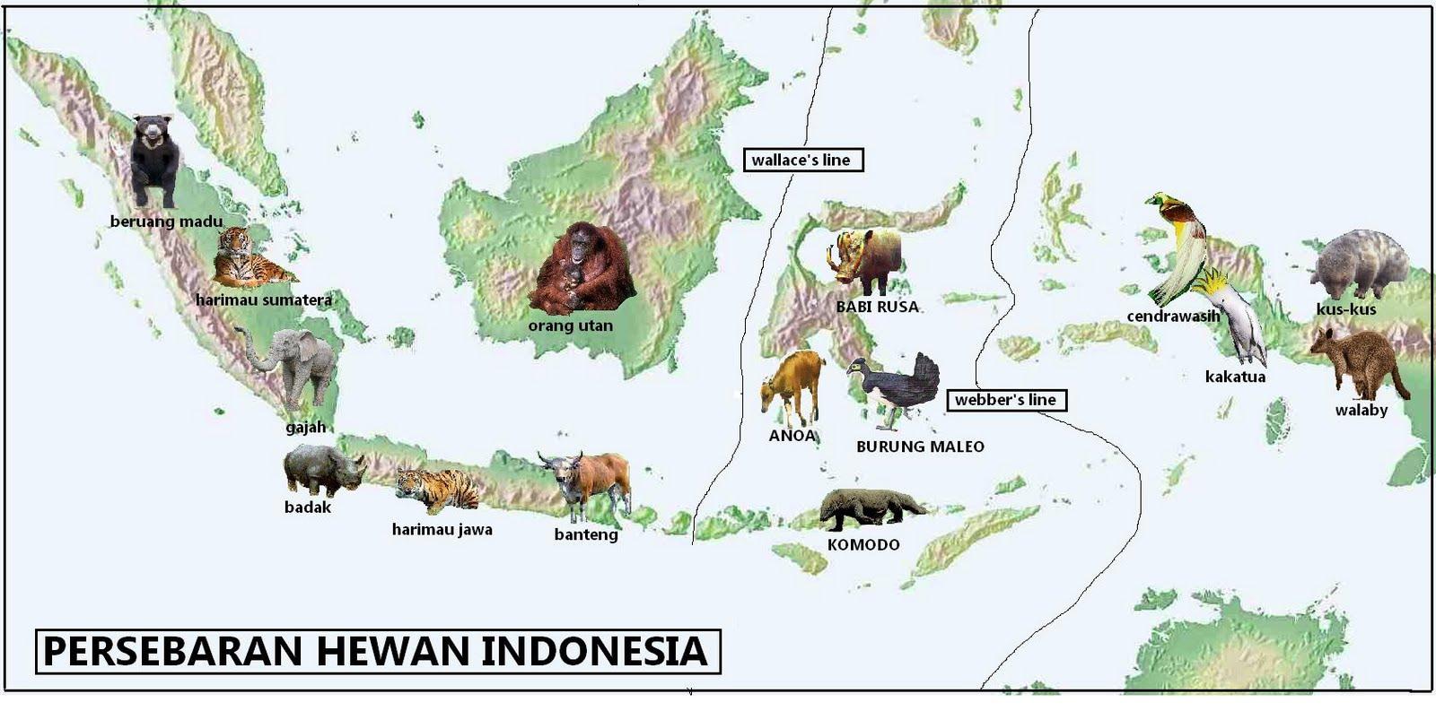 geographic corner: peta persebaran fauna di Indonesia