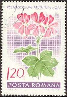 1968 Posta Romana - Pelargonium Peltatum, Muscata