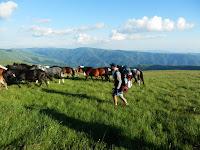 wild horses in Stara Planina