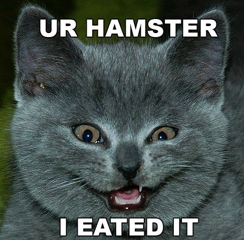 Funny Cat Pictures Pics Fun