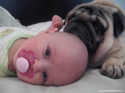 funny_picture_dogy_and_baby