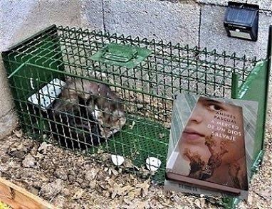 El ladrón de huevos 📚📖🌷