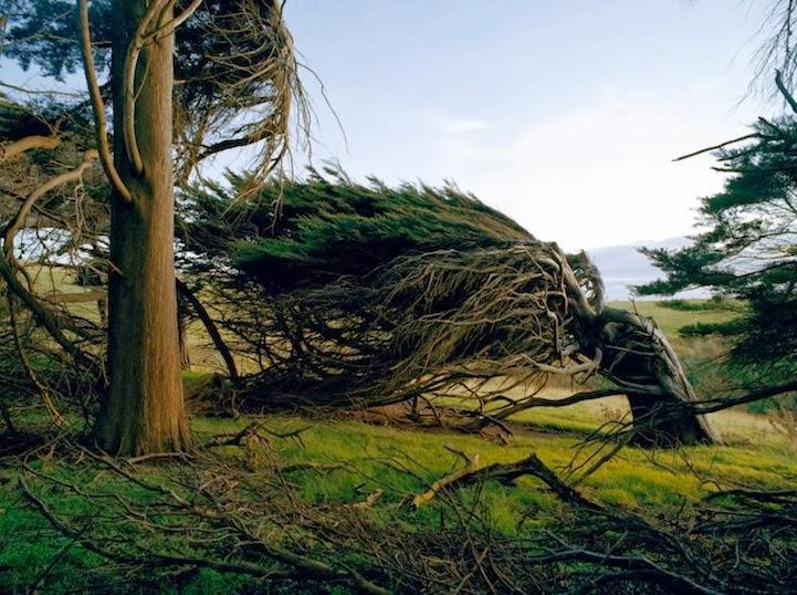 Zanimljivosti iz  geografije - Page 2 Windswept+trees+slope+point+-5