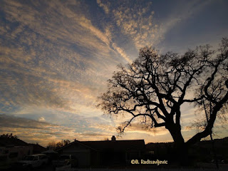 Oak at Sunset, © B. Radisavljevic