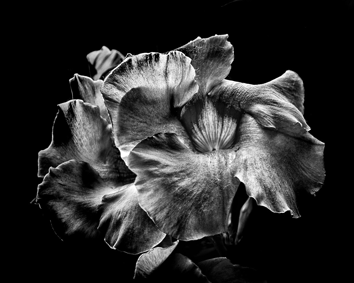 Backyard Flowers In Black And White 2