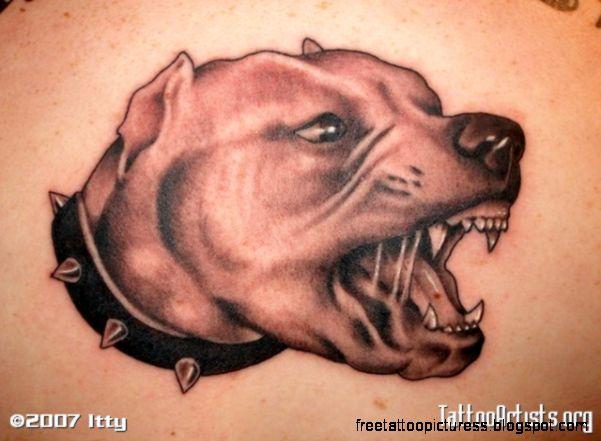 Pitbull Tattoo Designs  Tattoo Designs Ideas