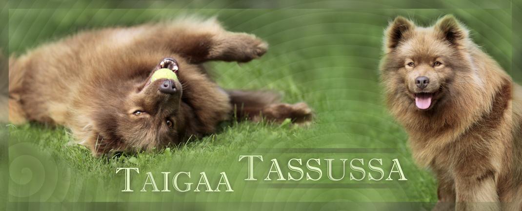 Taigaa Tassuissa