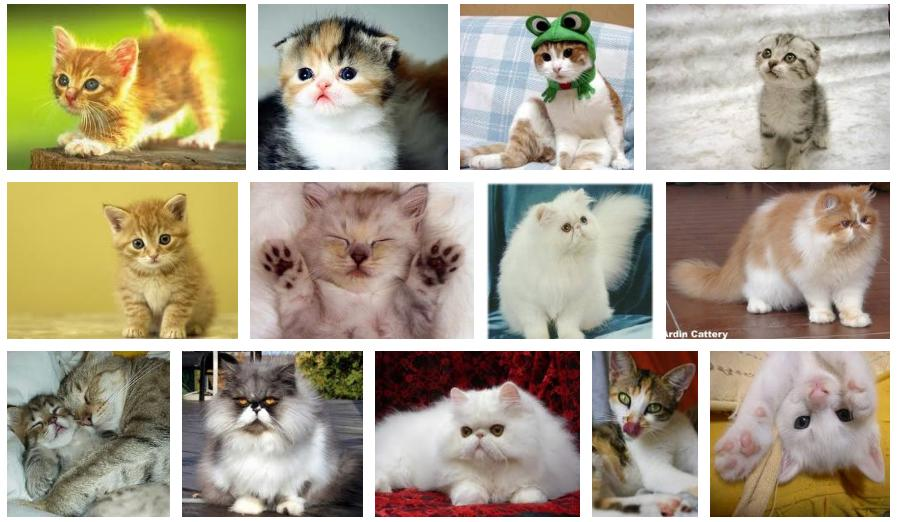 Selamat Datang Di Blog Koleksi Gambar Kucing