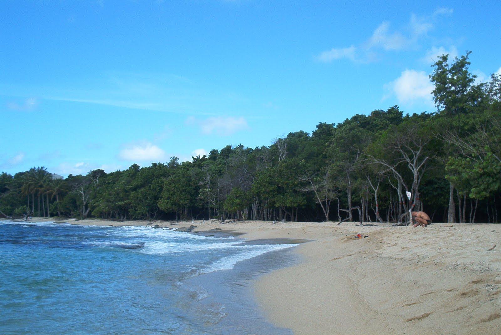 Les plages du sud de la martinique le blog de yeude - Sainte luce martinique office du tourisme ...