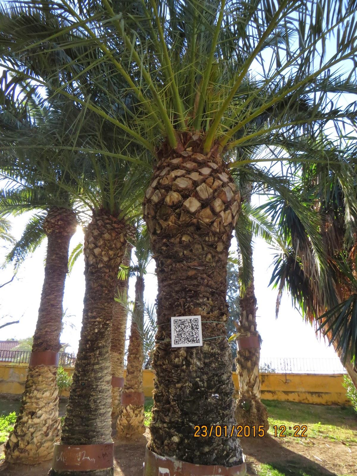 Pajaricos de murcia c digos qr en el jard n bot nico del for Informacion sobre el jardin botanico
