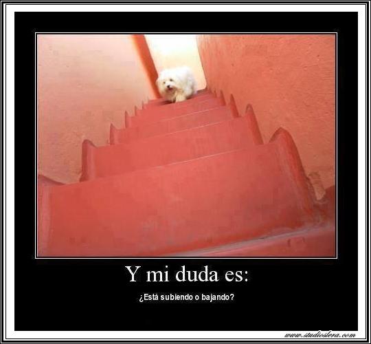 studioslera.com perro escalera subir bajar