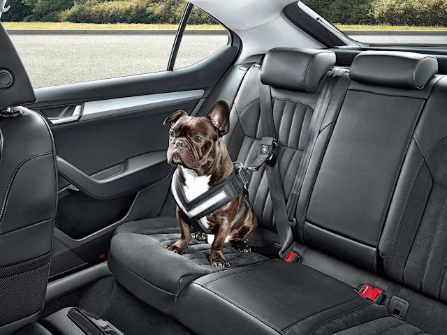 ремни безопасности для собак