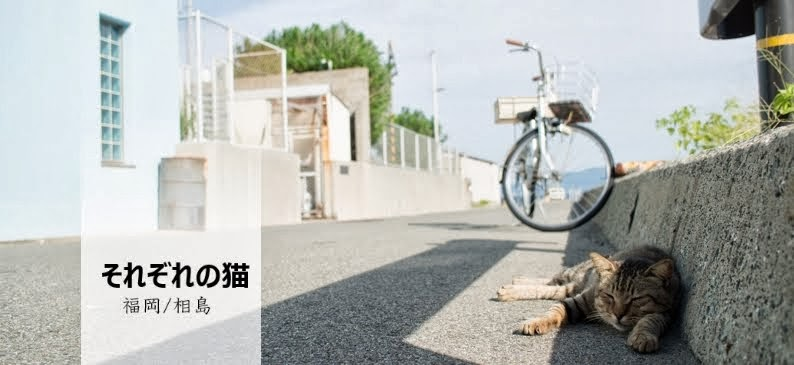 それぞれの猫 福岡/相島 Ainoshima