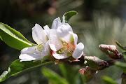 Fleurs de printemps dsc