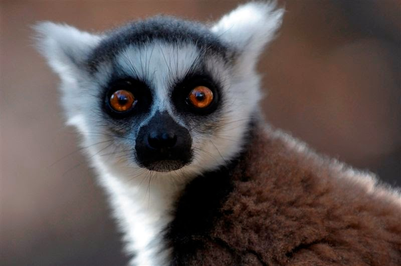 Madagascar i Illa Reunió- Juliol 2013