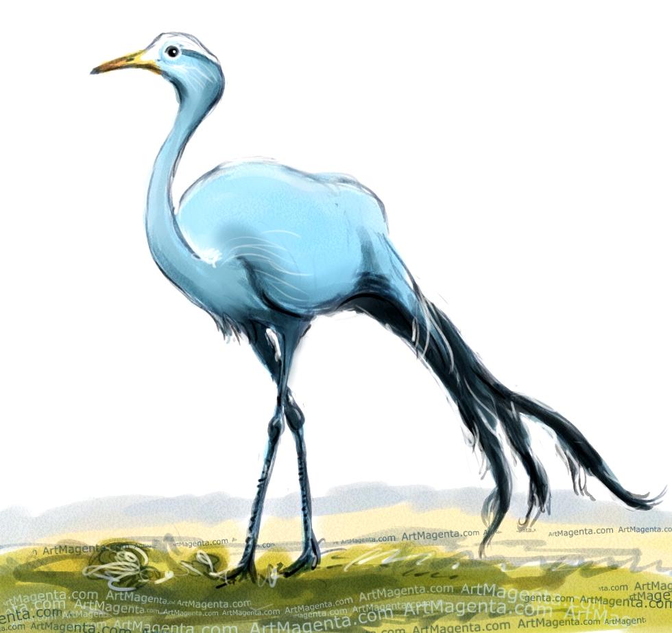 Blue Crane sketch painting. Bird art drawing by illustrator Artmagenta