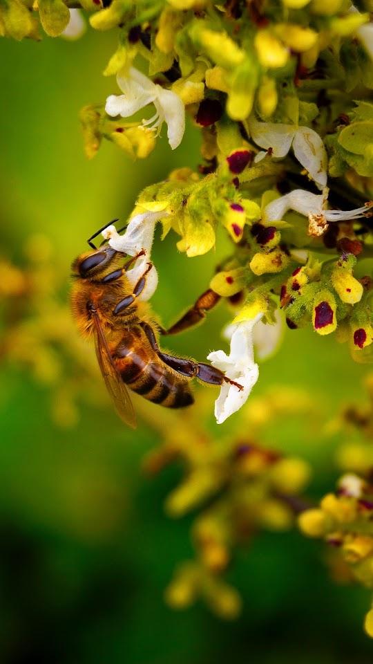 Bee Macro Flower Galaxy Note HD Wallpaper