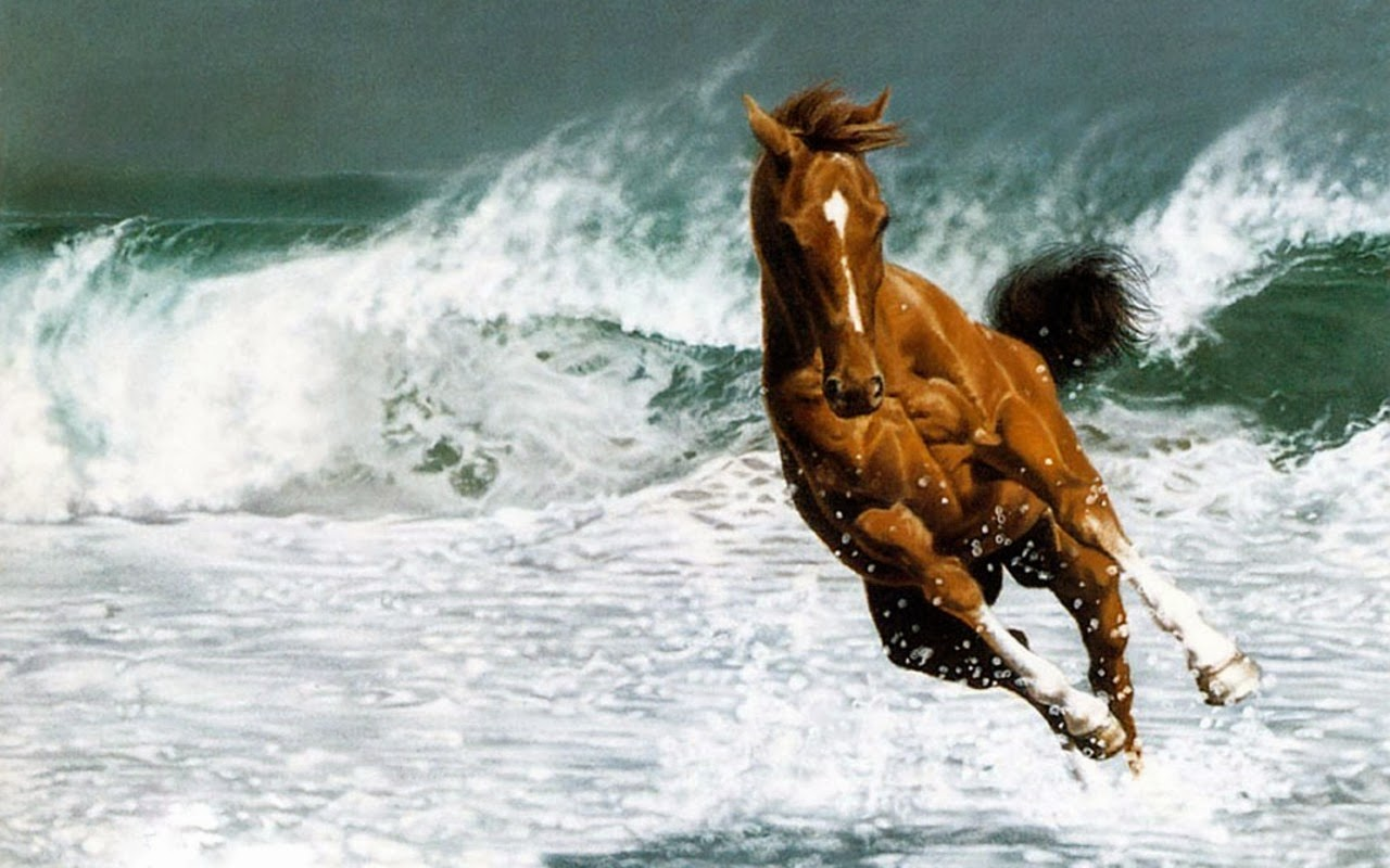 Download   Wallpaper Horse Beauty - Beautiful+Horse+Hd+Wallpapers+2013_5  Perfect Image Reference_425910.jpg