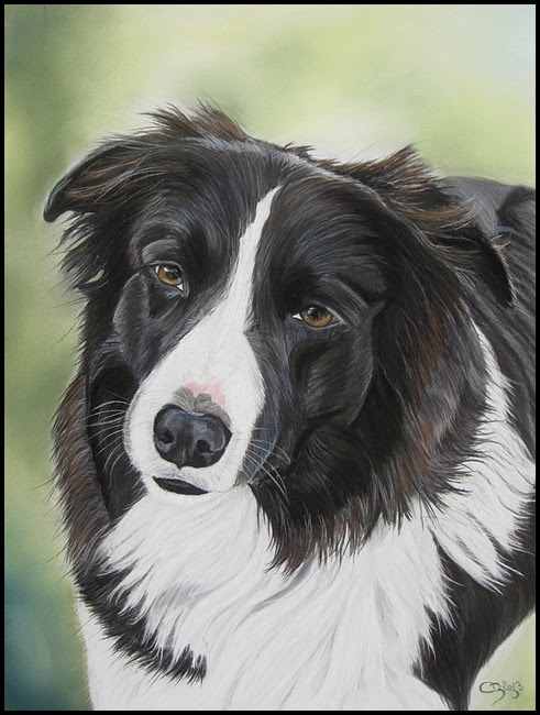 border collie pastel