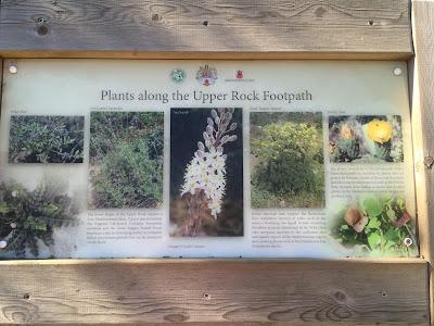 Plants along the Upper Rock Footpath